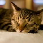 【要チェック】寝ながらダイエット!?ダイエットに良い睡眠の取り方