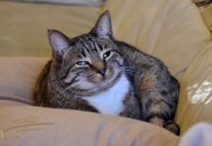 1日5分で猫背は治る!簡単ラクラク猫背改善エクササイズ!